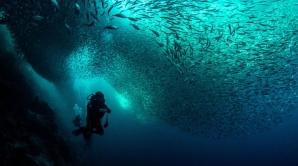 Dia de los oceanos. Submarinismo