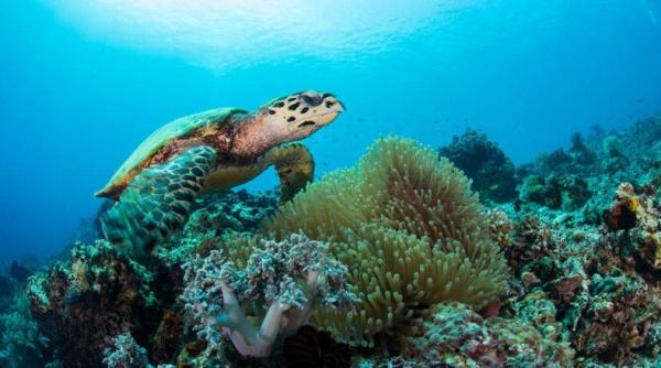 Dia de los oceanos. Tortuga